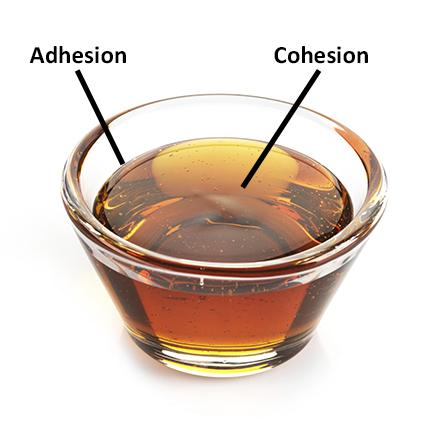 Adhesion-Cohesion-179636931